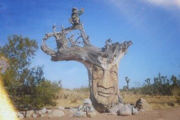 Joshua-Tree-National-Park-Treebeard-Groot