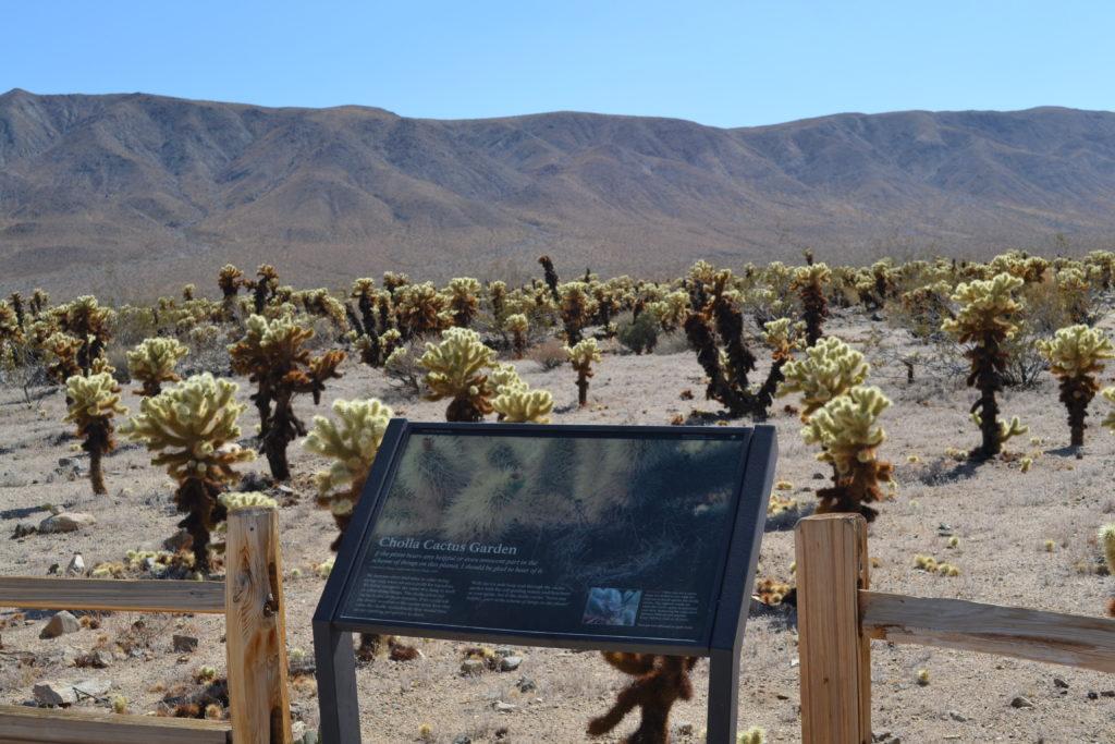 joshua-tree-national-park-climbing-hiking-camping-adventure-tour-the-cholla-cactus-garden-gardens-1