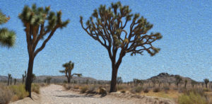dirt-road-joshua-tree-national-park-adventure-tour